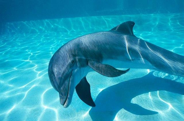 dnews-files-2013-05-dolphin-assisted-birth-130529-670x440-jpg